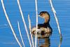 20190204-Birding at SNWR-RM5_4359