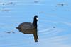 20190204-Birding at SNWR-RM5_4324