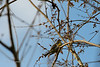 20190204-Birding at SNWR-RM5_4330