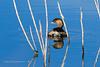 20190204-Birding at SNWR-RM5_4362