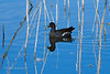 20190204-Birding at SNWR-RM5_4369