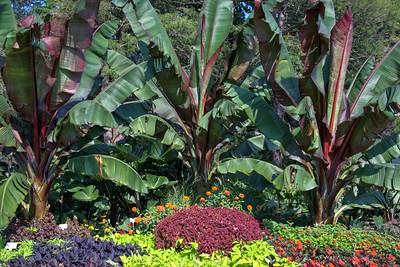 Cornell Arboretum