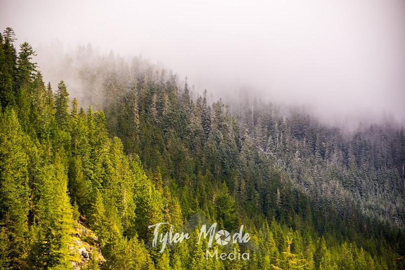 233  G Sun and Snowy Trees