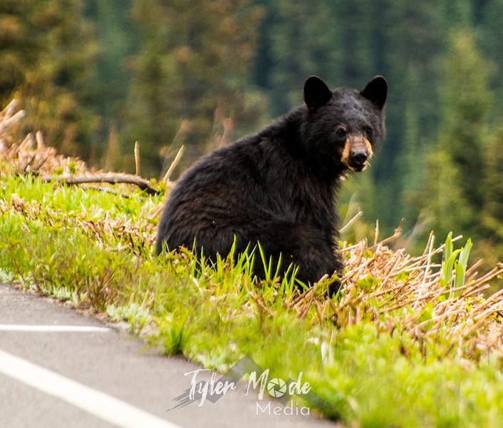 46  G Bear Close