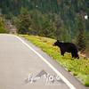 33  G Bear