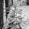 126  G Snowy Tree BW V