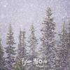 204  G Snowy Trees