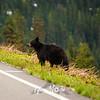 60  G Bear