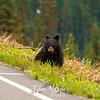 56  G Bear