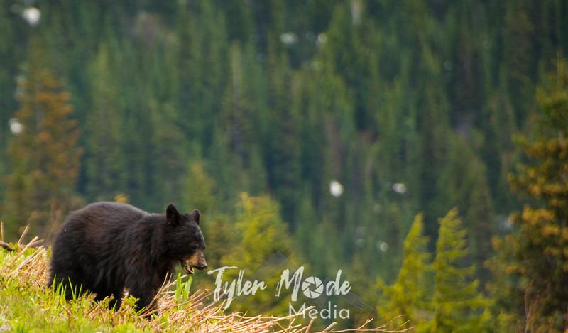 58  G Bear