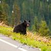 43  G Bear Close