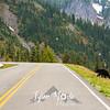 31  G Bear Wide