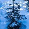 26  G Snowy Tree