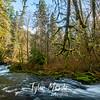4  G Sweet Creek