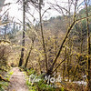3  G Sweet Creek Trail