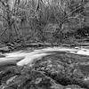 8  G Sweet Creek BW V