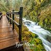 18  G Sweet Creek and Trail