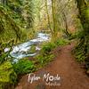 20  G Sweet Creek and Trail
