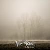 7  G Foggy Trees