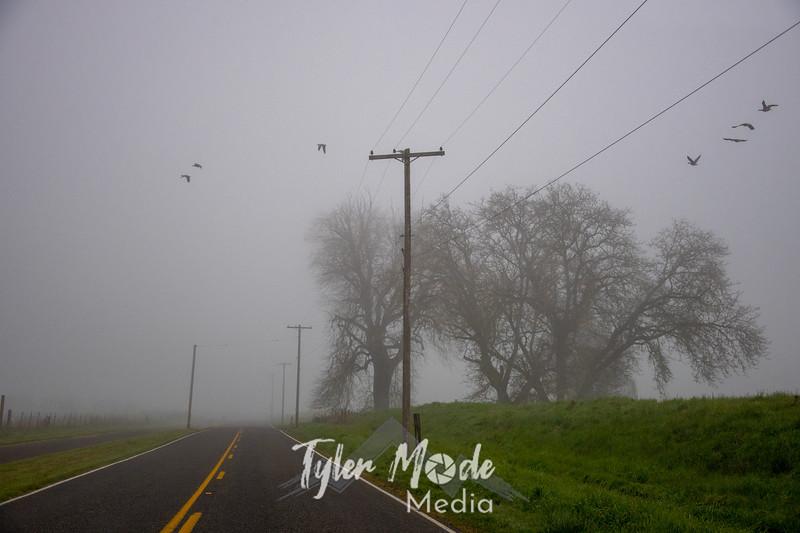 2  G Foggy Trees and Birds