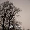 6  G Bird in Tree