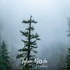 8  G Misty Tree Near Multnomah Falls
