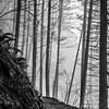 29  G Multnomah Falls BW V
