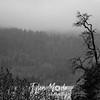 14  G Tree Near Multnomah Falls BW