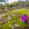 68  G Grass Widows and Trail