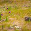 8  G Grass Widows
