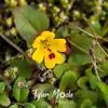 48  G Yellow Flower
