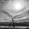 34  G Tree and Clouds BW V