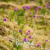 19  G Grass Widows
