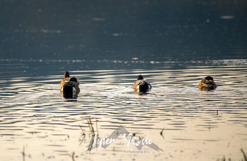 1  G Ducks in a Row