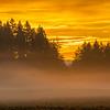 29  G Sunrise Mist