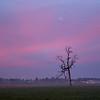 17  G Tree and Moon Sunrise