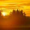 34  G Sunrise Mist