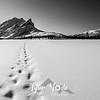24  G Sukakpak Mountain and Snowshoe Tracks BW