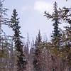 38  G Mountain Through Trees
