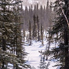 29  G Snowy Lake View V