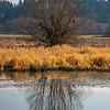 26  G Tree Reflections V