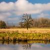 23  G Cloud Reflections V