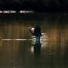 1  G Eagle Fishing