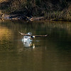 18  G Eagle Fishing