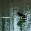 15  G Eagle Fishing
