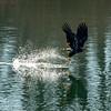 16  G Eagle Fishing