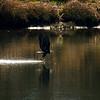 3  G Eagle Fishing