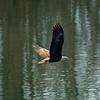 26  G Eagle Fishing V