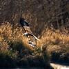 11  G Eagle Fishing V