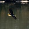 12  G Eagle Fishing